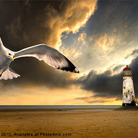 Buy canvas prints of soaring inshore by meirion matthias