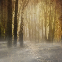 Buy canvas prints of spooky misty woodland by meirion matthias
