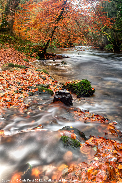 Winding away to Fingle Bridge Canvas print by Chris Frost