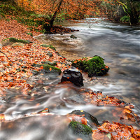 Buy canvas prints of Winding away to Fingle Bridge by Chris Frost