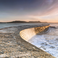Buy canvas prints of Sunkissed Cobb at Lyme Regis by Chris Frost