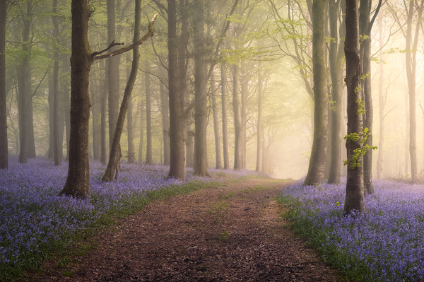 Spring in your Step Canvas print by Chris Frost
