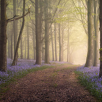Buy canvas prints of Spring in your Step by Chris Frost