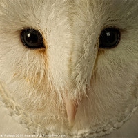 Buy canvas prints of Barn Owl by Neal Puttock