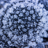Buy canvas prints of Ice Flower by Neal Puttock
