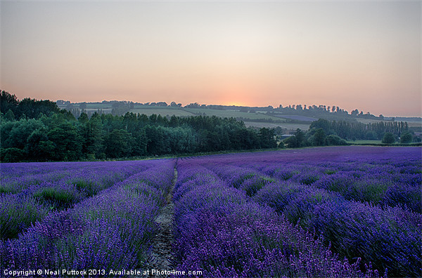 Lavender Field Canvas print by Neal Puttock