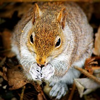 Buy canvas prints of Squirrel by Rachael Jackson