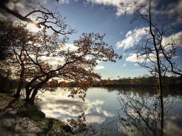 Autumnal reflection  Canvas print by Rachael Jackson