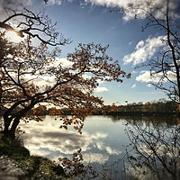 Buy canvas prints of Autumnal reflection  by Rachael Jackson