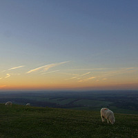 Buy canvas prints of Sheep On The Gibbit by Andrew Middleton
