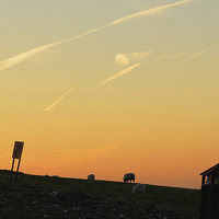 Buy canvas prints of Grazing The Orange Sky by Andrew Middleton