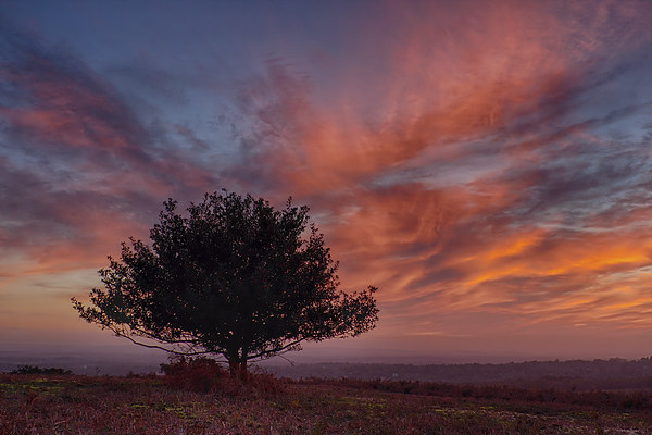 Lone Tree At Sunset Canvas print by Phil Clements