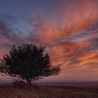 Buy canvas prints of Lone Tree At Sunset by Phil Clements