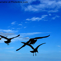 Buy canvas prints of The Birds. by camera man