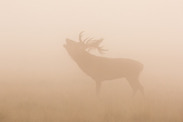 Growlers in the mist Canvas print by Philip Male