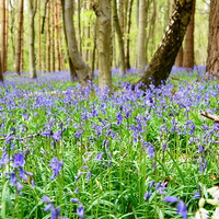 Buy canvas prints of Spring in the woods by Craig Cheeseman