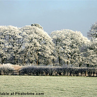 Buy canvas prints of FROSTY MORNING TOO by malcolm fish