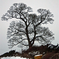 Buy canvas prints of Winter Silhouette by malcolm fish
