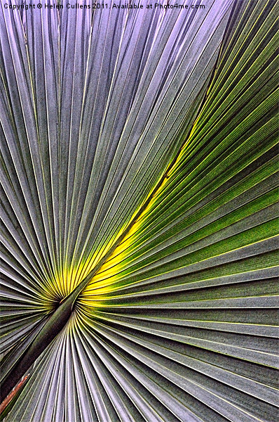 PALM LEAF Canvas print by Helen Cullens