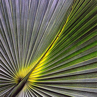 Buy canvas prints of PALM LEAF by Helen Cullens