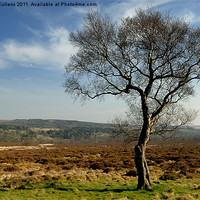 Buy canvas prints of MOORLAND TREE by Helen Cullens