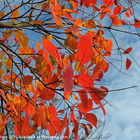 Buy canvas prints of AUTUMN COLOUR by Helen Cullens
