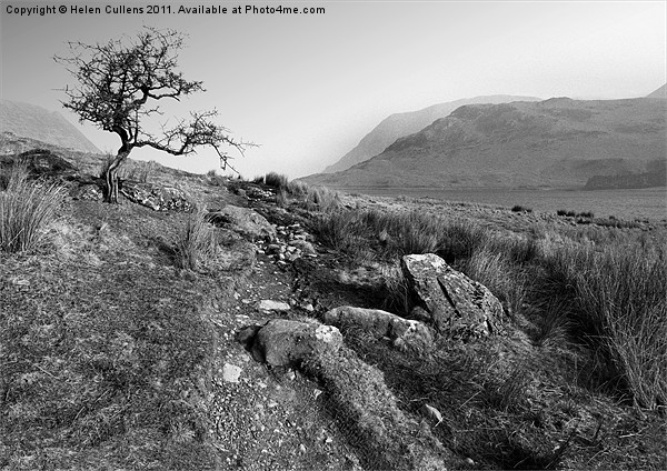 HAWTHORN AT CRUMMOCK Canvas print by Helen Cullens