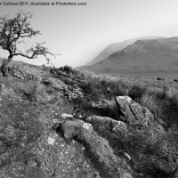 Buy canvas prints of HAWTHORN AT CRUMMOCK by Helen Cullens