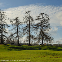 Buy canvas prints of LARCHES AT VERULAMIUM by Helen Cullens