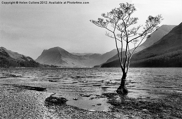 BUTTERMERE TREE Canvas print by Helen Cullens
