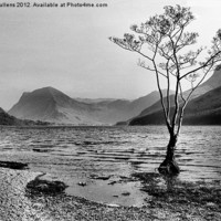 Buy canvas prints of BUTTERMERE TREE by Helen Cullens