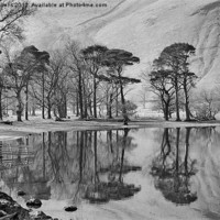 Buy canvas prints of THE BUTTERMERE PINES by Helen Cullens