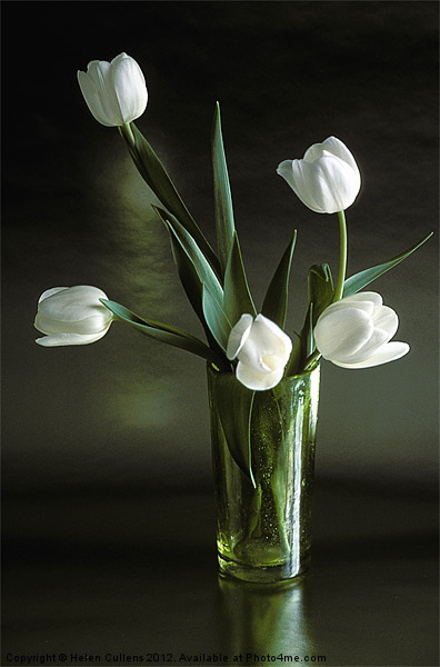 WHITE TULIPS Canvas print by Helen Cullens