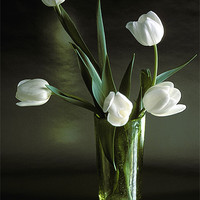 Buy canvas prints of WHITE TULIPS by Helen Cullens