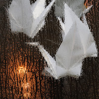 Buy canvas prints of FLIGHT OF SWANS by Helen Cullens