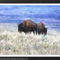 Buy canvas prints of American bison by Larry Stolle