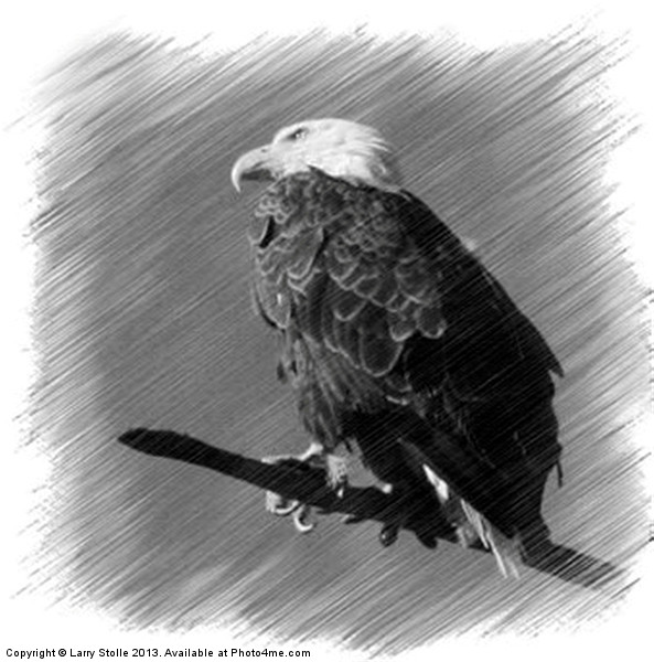 Eagle Framed Mounted Print by Larry Stolle