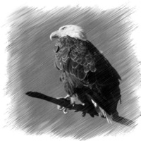 Buy canvas prints of Eagle by Larry Stolle