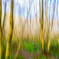 Buy canvas prints of Walk In The Woods by Bill Buchan