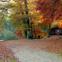 Buy canvas prints of Dunkeld Autumn by Laura McGlinn Photography