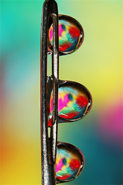 Needle with Tropical Droplets Canvas print by Sharon Johnstone
