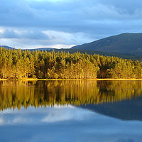 Buy canvas prints of Loch Garten, Cairngorms National Park, Scotland    by Chris Petty