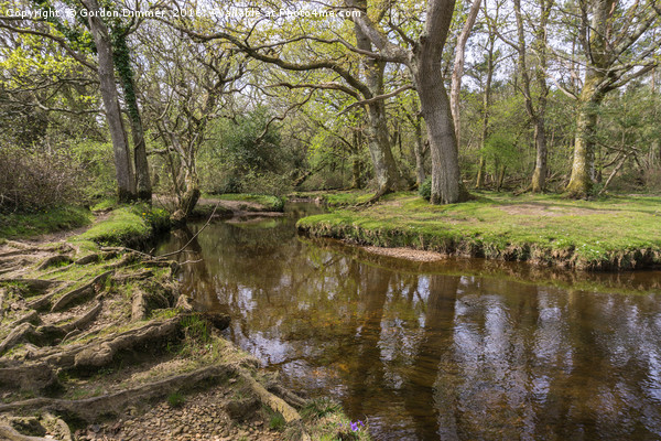 Mill lawn Brook near Puttles Bridge in the New For Canvas print by Gordon Dimmer
