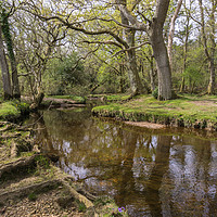 Buy canvas prints of Mill lawn Brook near Puttles Bridge in the New For by Gordon Dimmer