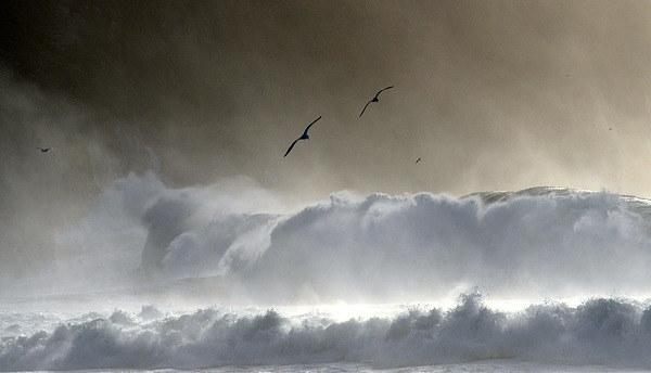 Seagulls Canvas print by barbara walsh