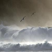 Buy canvas prints of Seagulls by barbara walsh