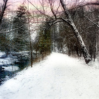 Buy canvas prints of Snowy Trail by Elaine Manley