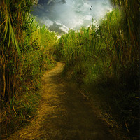 Buy canvas prints of Follow the Path by Elaine Manley