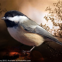 Buy canvas prints of Black Capped Chickadee by Elaine Manley
