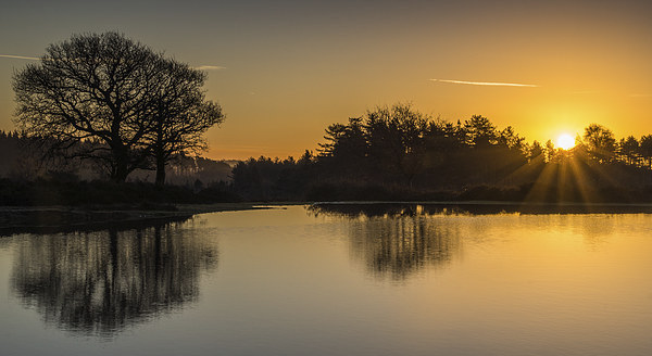 New Forest Sunrise Canvas print by Phil Wareham
